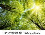 the warm spring sun shining... | Shutterstock . vector #127722122