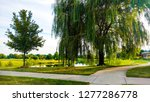 weeping willow path during a... | Shutterstock . vector #1277286778
