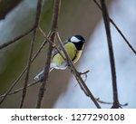 parus major  a small european...   Shutterstock . vector #1277290108