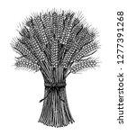 bunch of wheat  rye spikelets... | Shutterstock .eps vector #1277391268