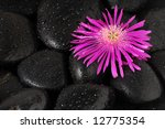 stone and flower - stock photo
