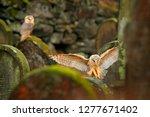 urban wildlife. magic bird barn ... | Shutterstock . vector #1277671402