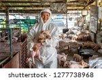 asian veterinarian holding for... | Shutterstock . vector #1277738968