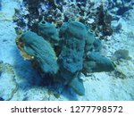 blue coral on the seabed | Shutterstock . vector #1277798572