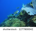 fishes and coral on the seabed | Shutterstock . vector #1277800042