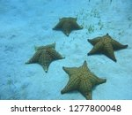 starfish on the seabed | Shutterstock . vector #1277800048