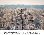 frost and ice crystal covered... | Shutterstock . vector #1277820622