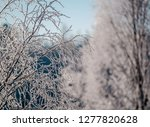 frost and ice crystal covered... | Shutterstock . vector #1277820628