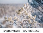 frost and ice crystal covered... | Shutterstock . vector #1277820652