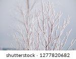 frost and ice crystal covered... | Shutterstock . vector #1277820682