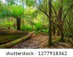 mount field national park in... | Shutterstock . vector #1277918362