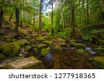 mount field national park in... | Shutterstock . vector #1277918365