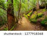 mount field national park in... | Shutterstock . vector #1277918368