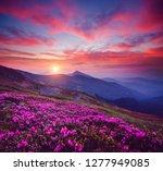 charming pink flower... | Shutterstock . vector #1277949085