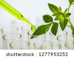 pipette over test tube dropping ... | Shutterstock . vector #1277953252