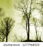 group of bare trees in winter.... | Shutterstock . vector #1277968525