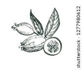 collection of feijoa fruit ... | Shutterstock . vector #1277980612