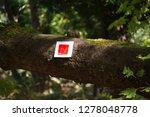 follow the signs | Shutterstock . vector #1278048778