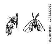 bug illustration   hand drawn... | Shutterstock .eps vector #1278233092