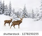 winter landscape with sika... | Shutterstock . vector #1278250255