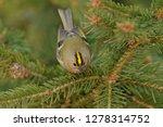 the goldcrest  regulus regulus  ...   Shutterstock . vector #1278314752