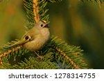the goldcrest  regulus regulus  ...   Shutterstock . vector #1278314755