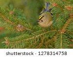 the goldcrest  regulus regulus  ...   Shutterstock . vector #1278314758