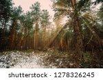 dreamy landscape with winter... | Shutterstock . vector #1278326245