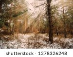dreamy landscape with winter... | Shutterstock . vector #1278326248