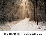road in winter forest and... | Shutterstock . vector #1278326332