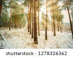 dreamy landscape with winter... | Shutterstock . vector #1278326362