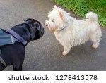 a black staffordshire bull... | Shutterstock . vector #1278413578