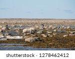 canada  nunavut  western shore... | Shutterstock . vector #1278462412