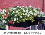 pots with flowers in bloom on a ... | Shutterstock . vector #1278494482