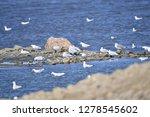 the birds of the sea   Shutterstock . vector #1278545602