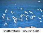 the birds of the sea   Shutterstock . vector #1278545605