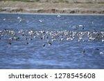the birds of the sea   Shutterstock . vector #1278545608