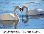 romantic swans in the lake | Shutterstock . vector #1278568348