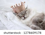 Stock photo sleeping kitten in white sheets wearing a crown on white background 1278609178