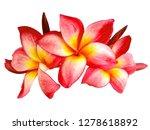 plumeria flower isolated on... | Shutterstock . vector #1278618892
