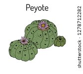 peyote  lophophora williamsii   ... | Shutterstock .eps vector #1278712282