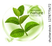 peppermint leaf  nature... | Shutterstock .eps vector #1278775672