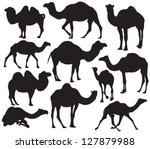 Vector Camel Silhouette