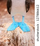 Blue-footed Booby, Galapagos Free Stock Photo HD - Public Domain Pictures