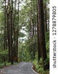 wet road through forest | Shutterstock . vector #1278879805