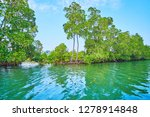 the lush red mangrove forest... | Shutterstock . vector #1278914848