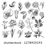 floral collection with leaves   ... | Shutterstock .eps vector #1278925192
