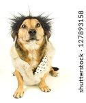 a dog hair straight | Shutterstock . vector #127893158