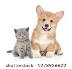 Stock photo happy corgi puppy with open mouth and tiny kitten together isolated on white background 1278936622