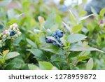 closeup view of northern... | Shutterstock . vector #1278959872